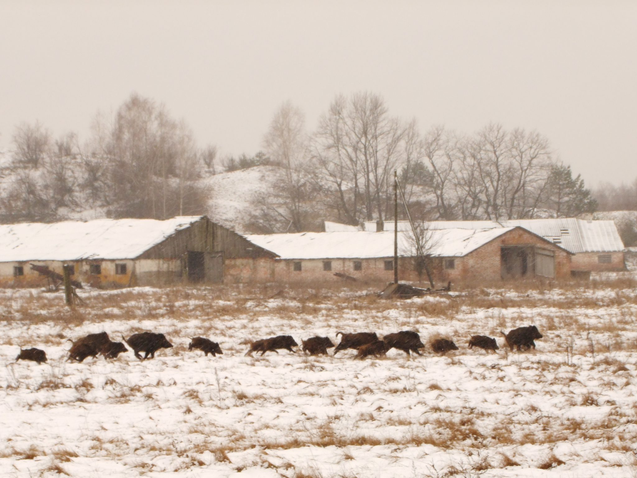 Tracking wildlife in Chernobyl: The emotional landscape of a disaster zone