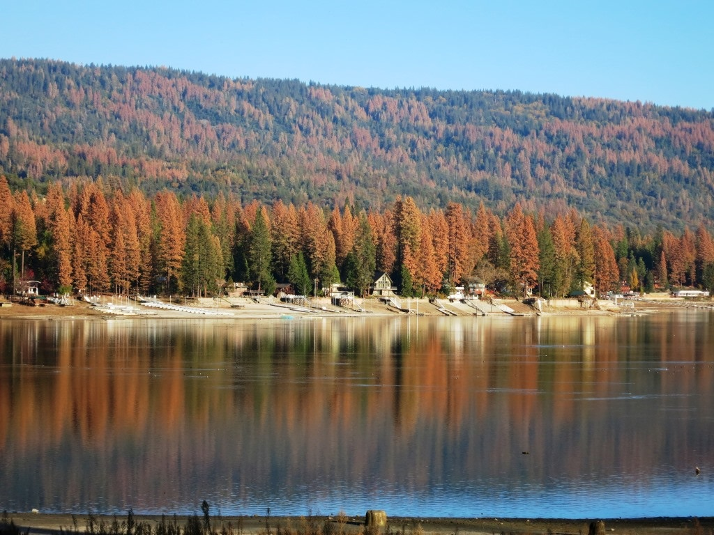Historical narratives drive debate over California's forests