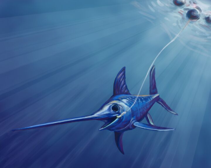 Reinventing California S Swordfish Fishery Ucsc Science Notes